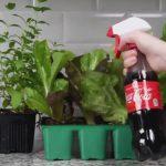 【画像】こんなに便利!絶対に知っておくべき「コーラの裏技」がこちらwwwww